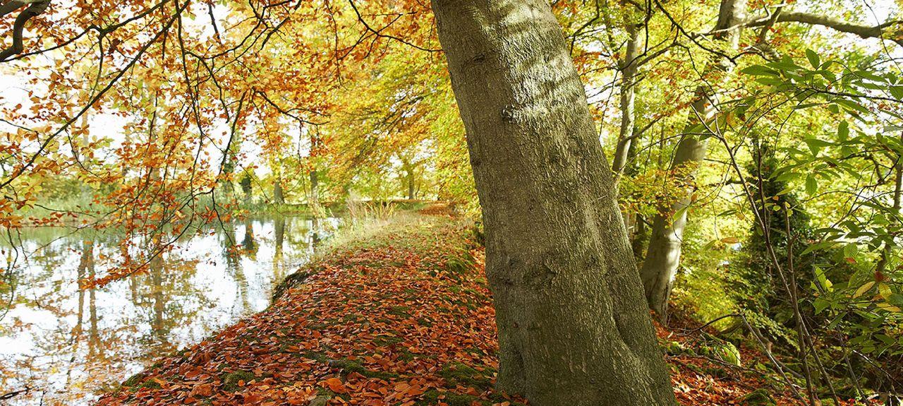 Great Witchingham, England, United Kingdom