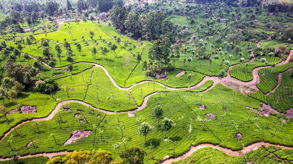 Munnar, Kerala, Indien