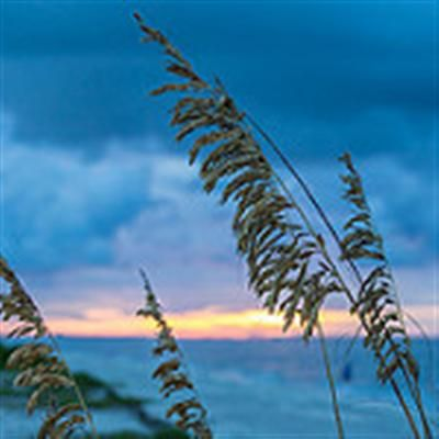 Sanibel Siesta, Sanibel Island, Fl, USA
