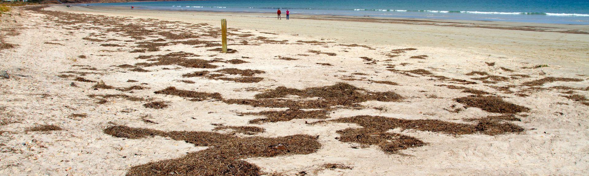 Aldinga Beach, Adelaide, South Australia, Australië