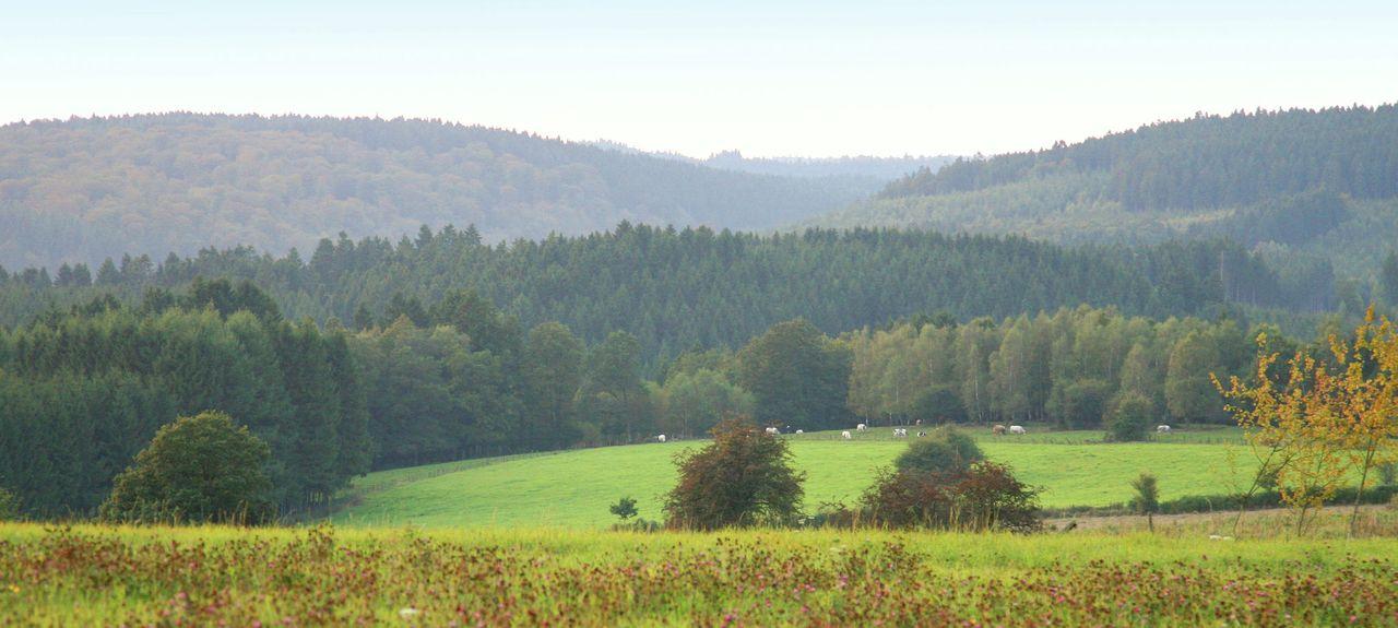 Gerpinnes, Région wallonne, BE