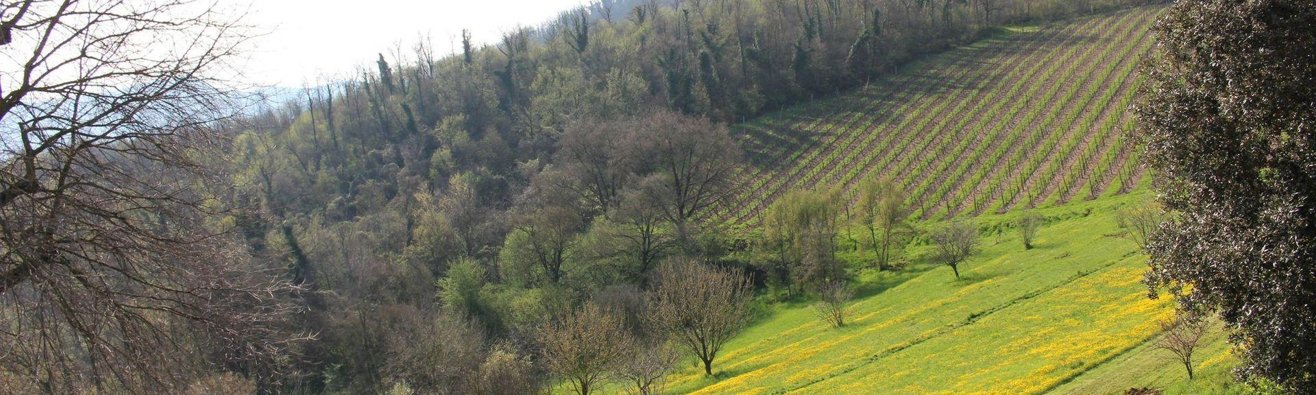 Castegnero, Vicenza, Veneto, Italy