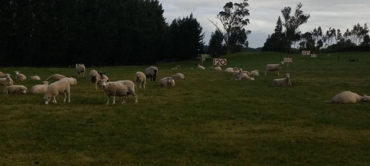 Morrinsville, Matamata-Piako, Waikato, New Zealand