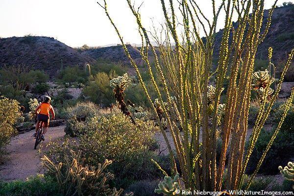 McDowell Mountain Ranch, Scottsdale, AZ, USA