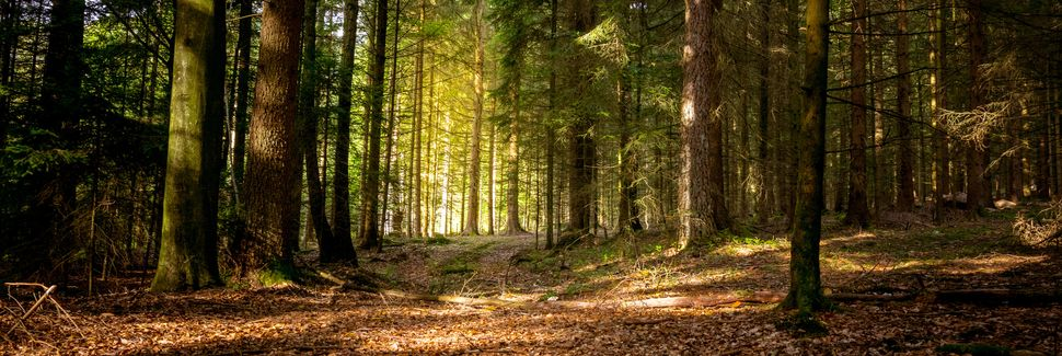 Image result for bavarian forests
