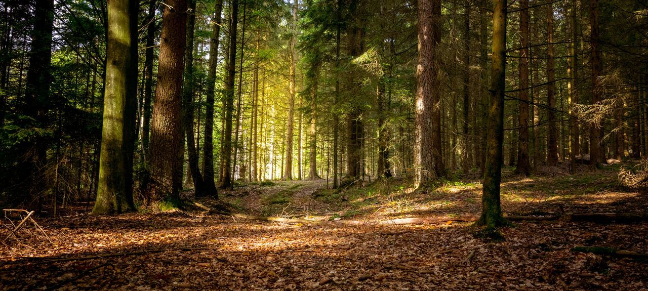 Bavarian Forest, Germany
