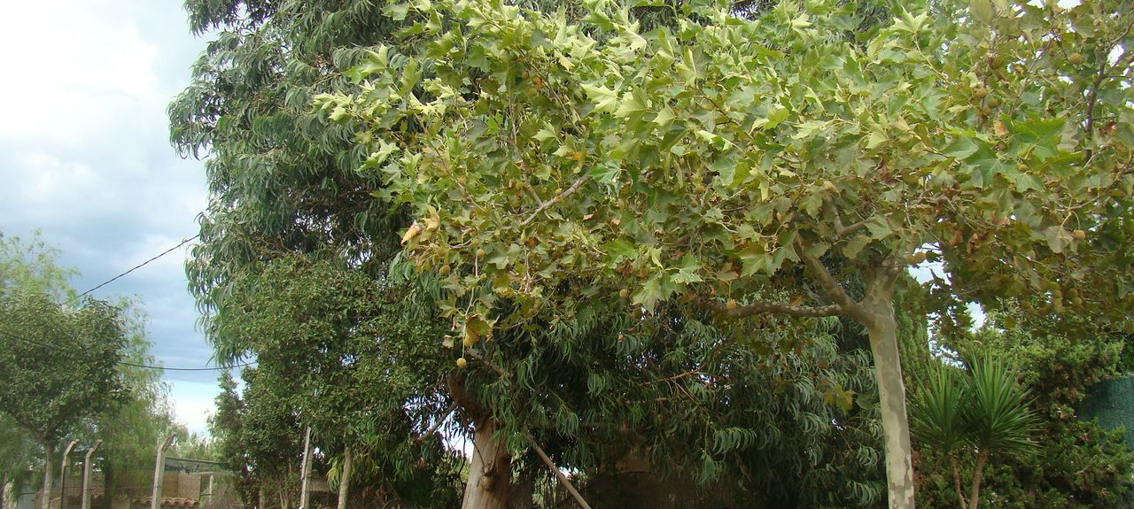 L'Eucaliptus, Tarragona, Spain