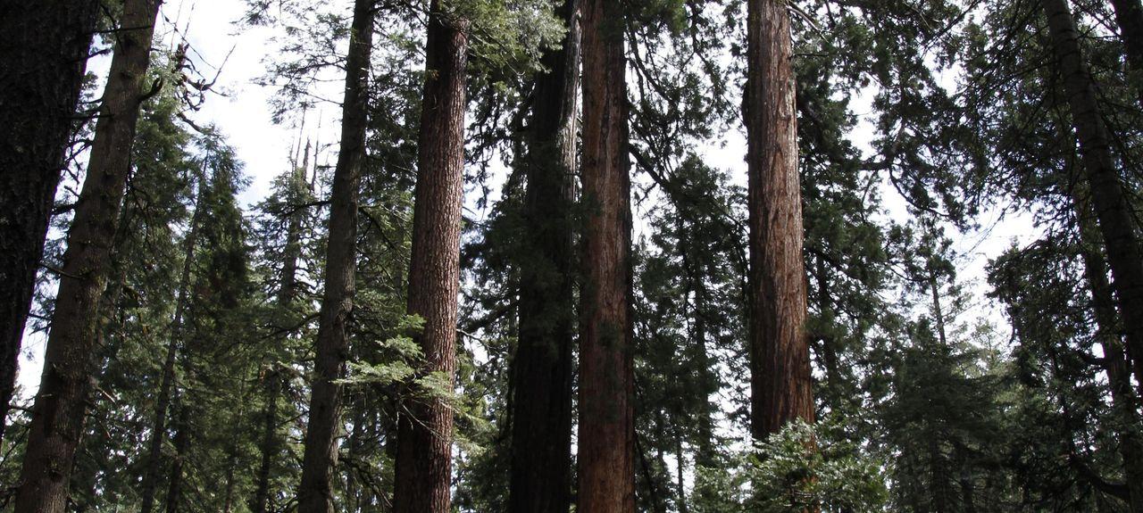 Angels Camp, California, United States