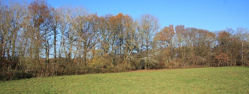 Mid Sussex District, Englanti, Yhdistynyt Kuningaskunta