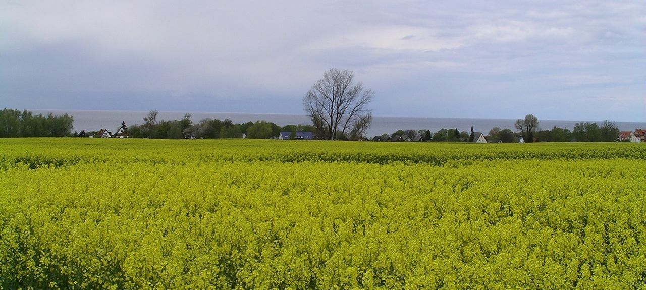 Kaltenhof, Insel Poel, Mecklembourg-Poméranie-Occidentale, Allemagne