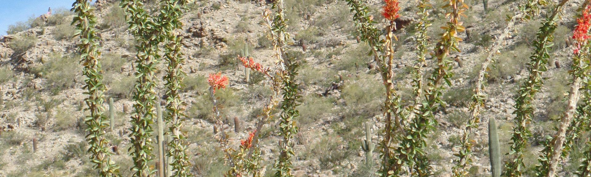 Ahwatukee Foothills Village, Phoenix, Arizona, USA