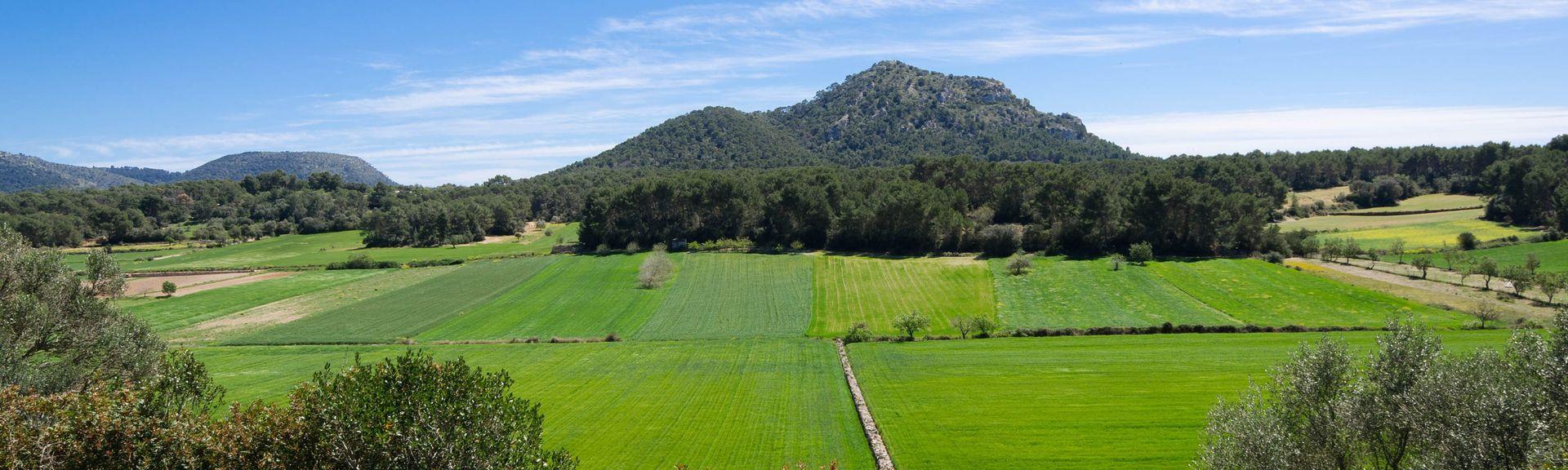 Puntiró, Palma de Majorque, Baléares, Espagne