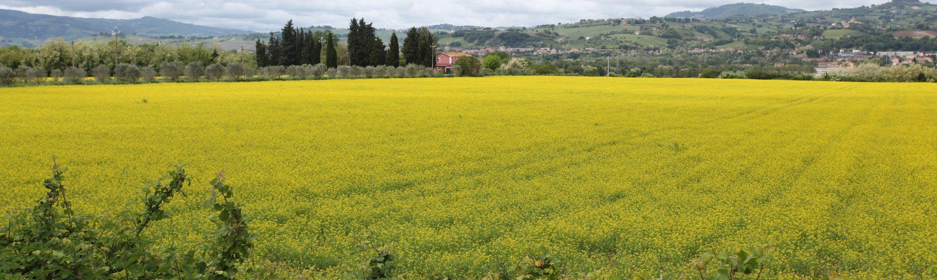 San Lorenzo In Campo, Province of Pesaro and Urbino, Le Marche, Italy