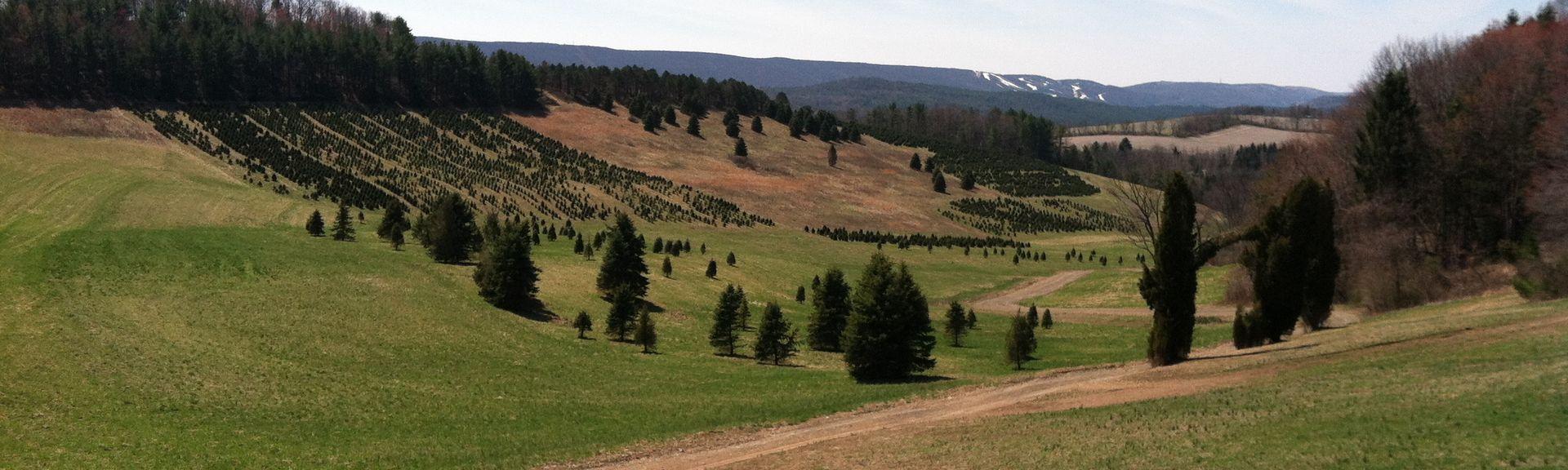 Blue Mountain (skigebied), Kunkletown, Pennsylvania, Verenigde Staten
