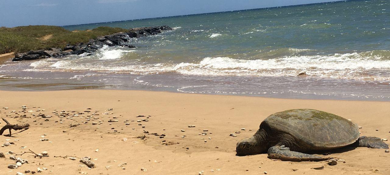 Waiohuli Beach Hale (Kihei, Hawaii, United States)