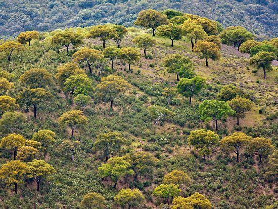 Monfragüe National Park, Villareal de San Carlos, Cáceres, Spain