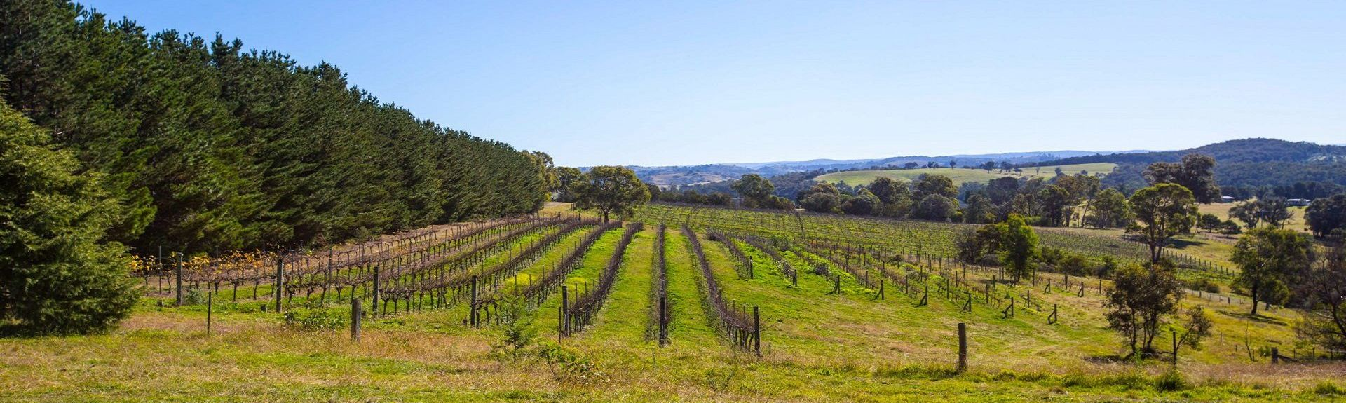 Centennial Vineyards, Bowral, New South Wales, Australia