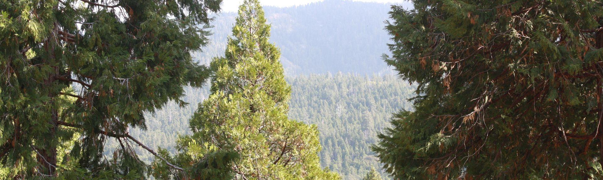 Camp Nelson, Californië, Verenigde Staten