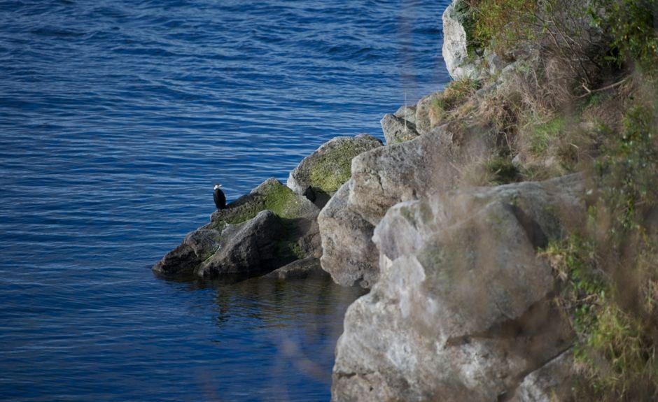Lake Rotoma, Bay of Plenty, North Island, New Zealand