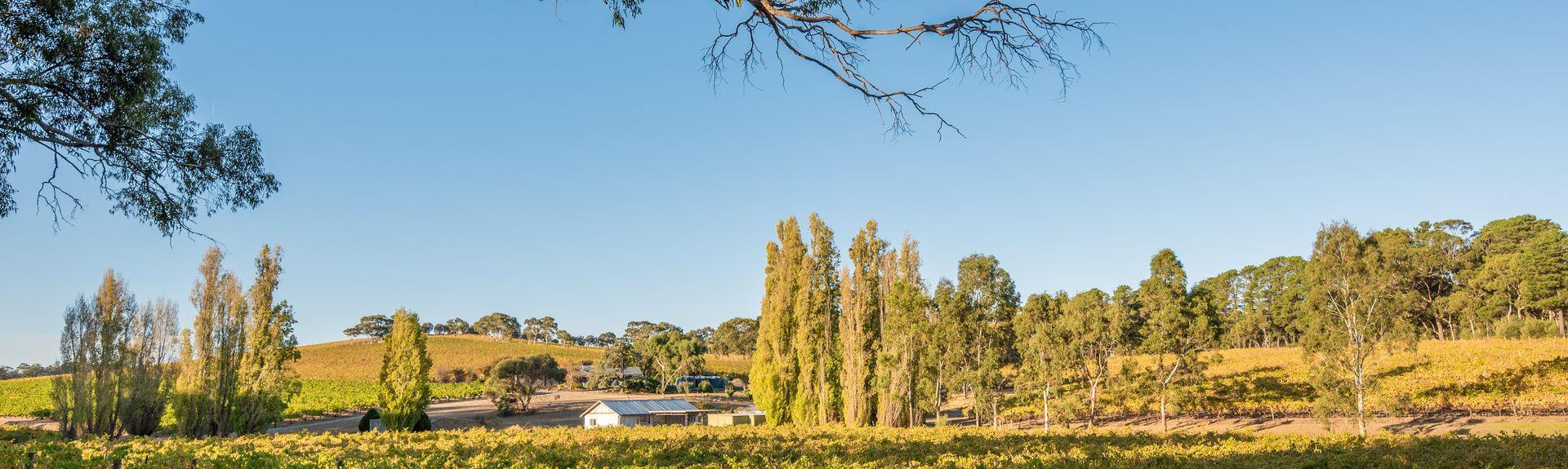 McLaren Vale, Adélaïde, Australie du Sud, Australie