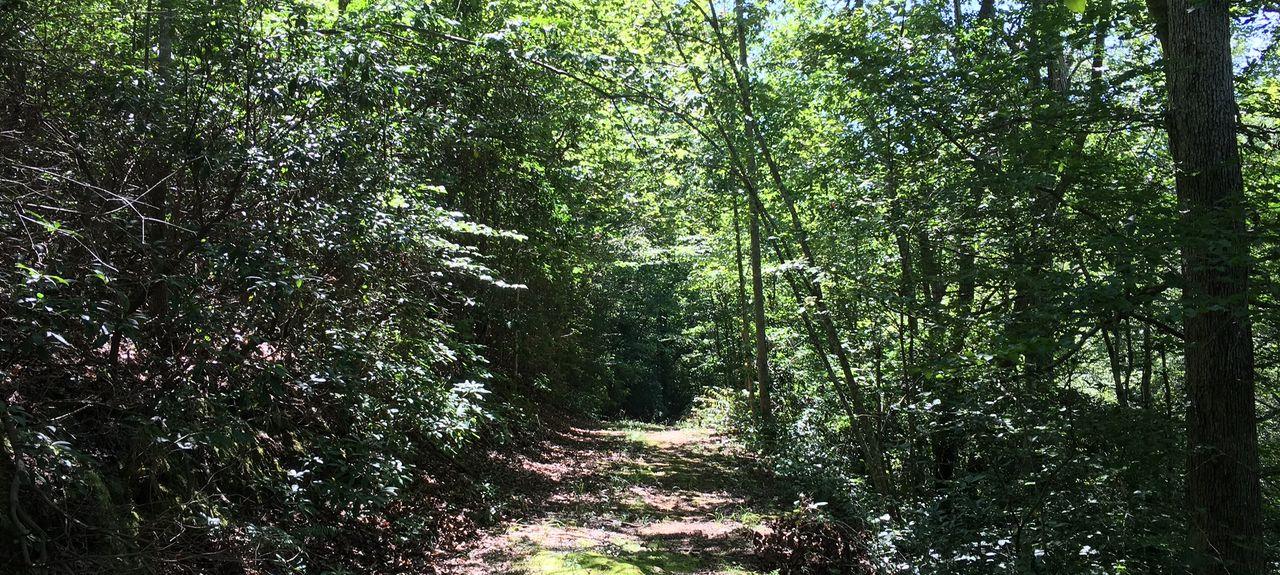 Forest City, Caroline du Nord, États-Unis d'Amérique