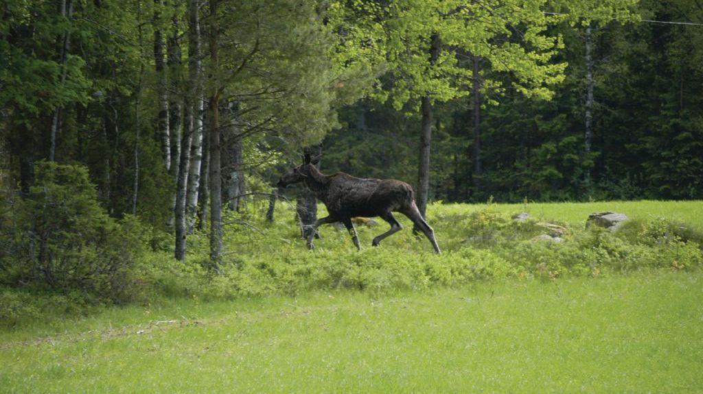 Hindås, Västra Götalands län, Schweden