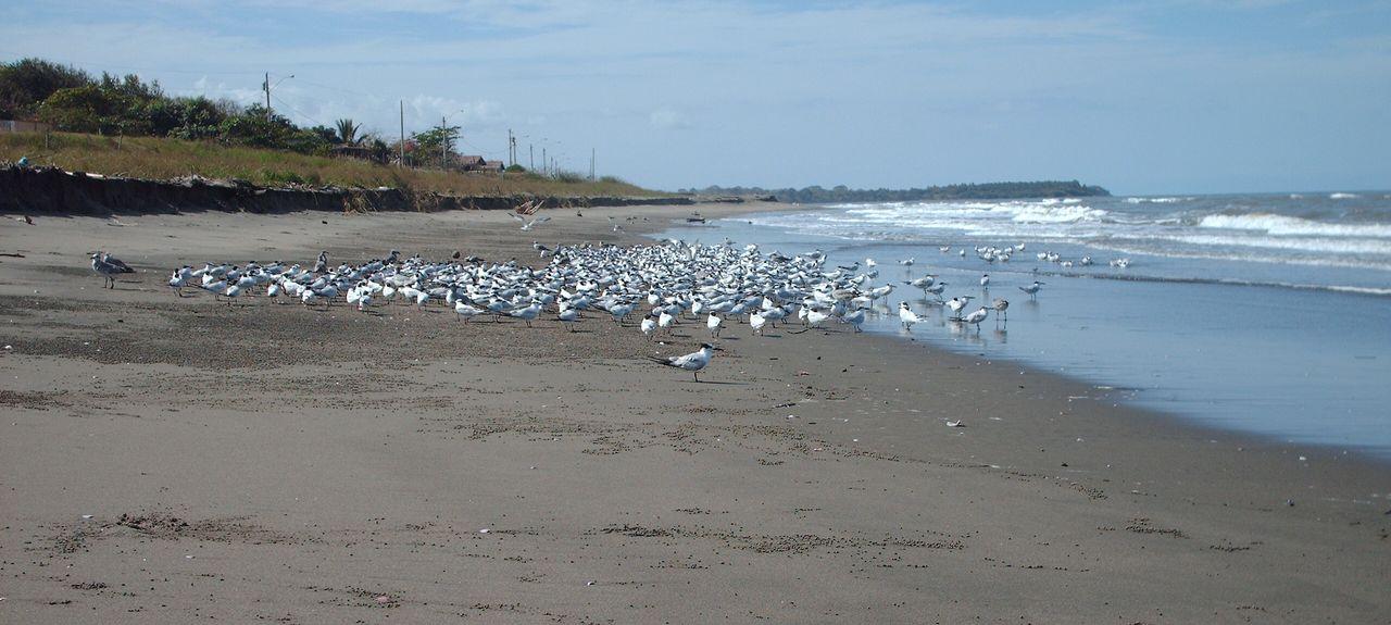 Peninsula de Azuero, Province de Los Santos, Panama