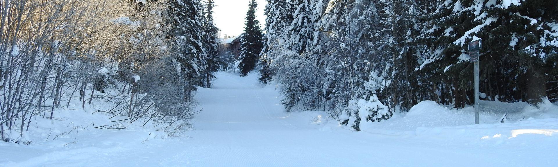 Trysil, Innlandet, Norge