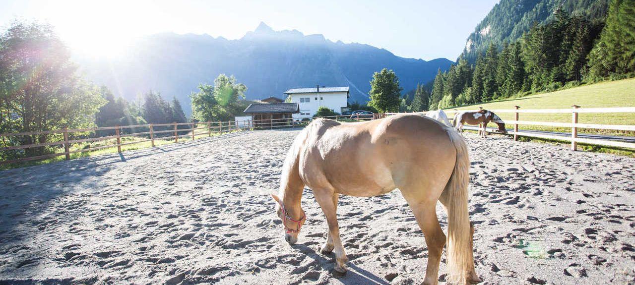 Zugspitze, Ehrwald, Tyrol, Austria