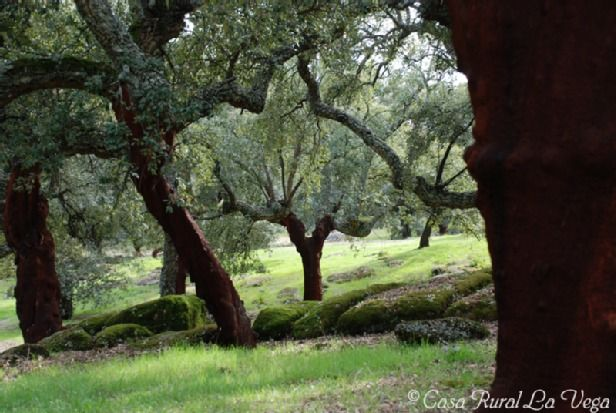 Alburquerque, Extremadura, Spanien
