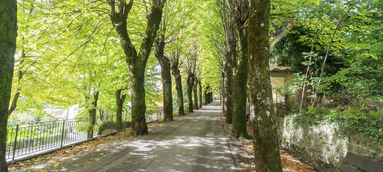 Lizzano In Belvedere, Metropolitan City of Bologna, Emilia-Romagna, Italy