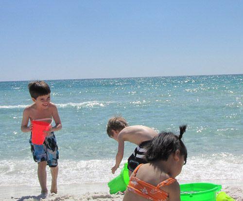 Blue Lupine, Blue Mountain Beach, FL, USA