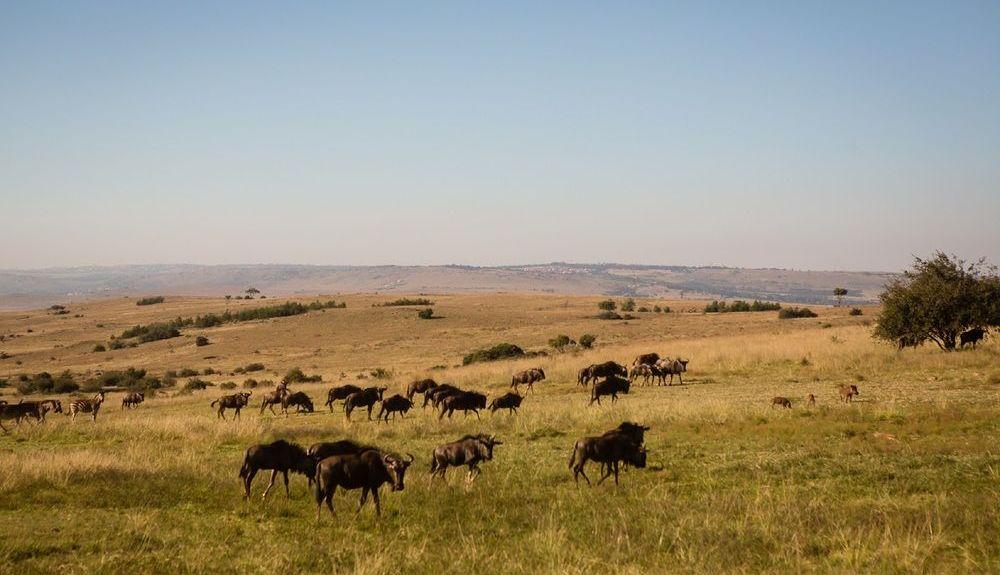 Krugersdorp, Gauteng, Südafrika