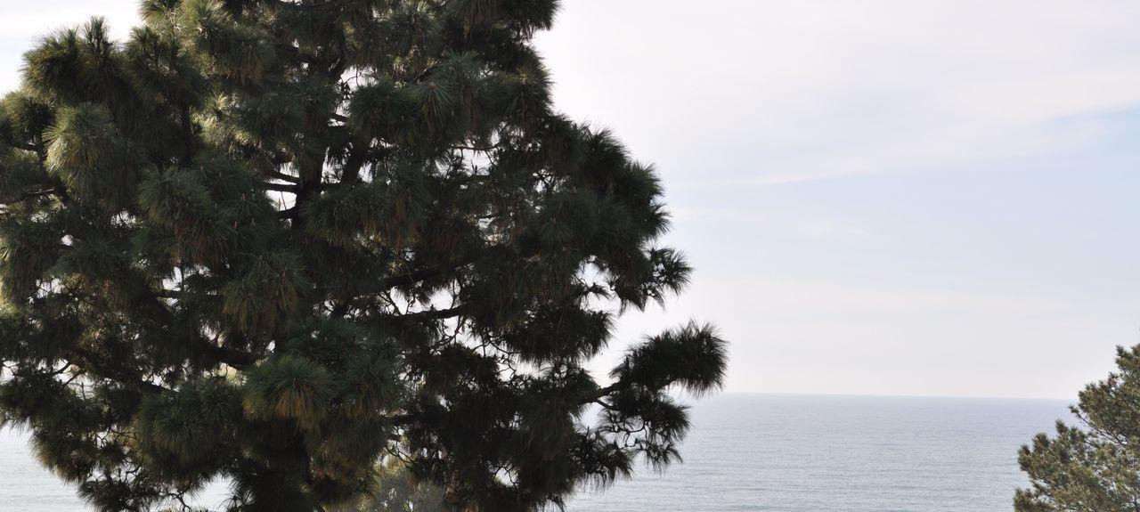 Torrey Pines, San Diego, CA, USA