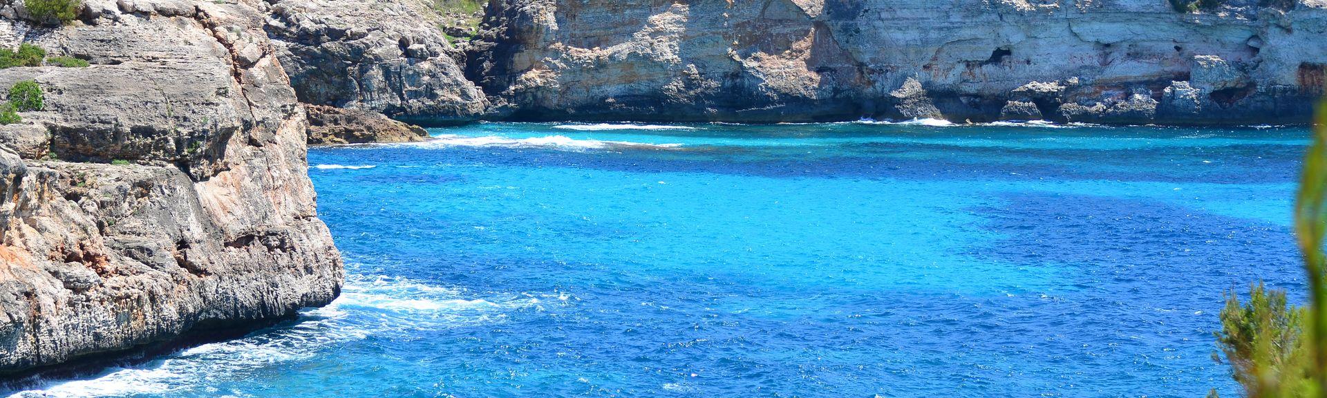 Élevage d'autruches Artestruz Mallorca, Campos, les Îles Baléares, Espagne