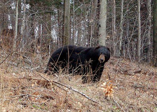 Pennsylvania Wilds, PA, USA