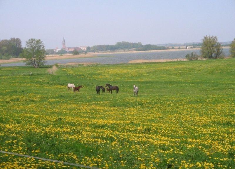 Rubitz, Kenz-Küstrow, Mecklembourg-Poméranie-Occidentale, Allemagne