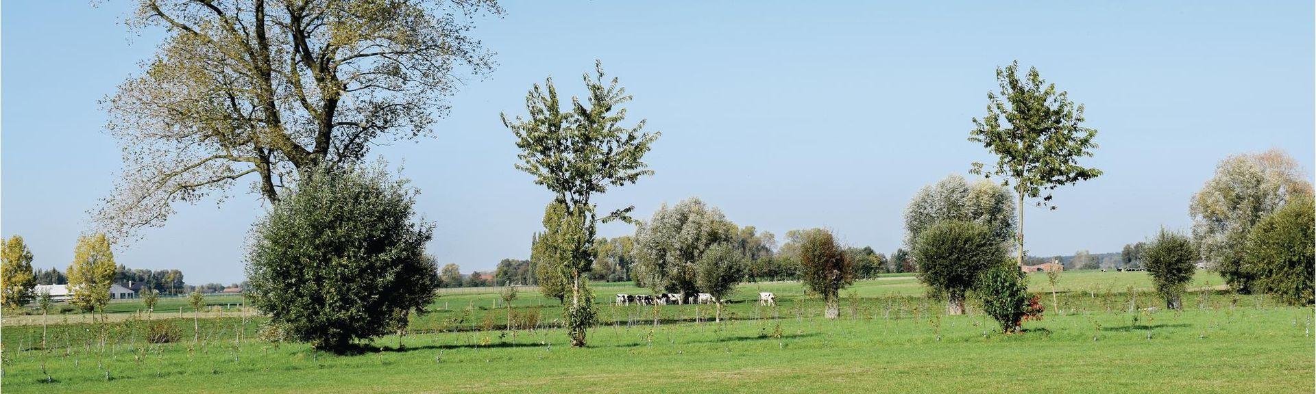 Maldegem, Região Flamenca, Bélgica