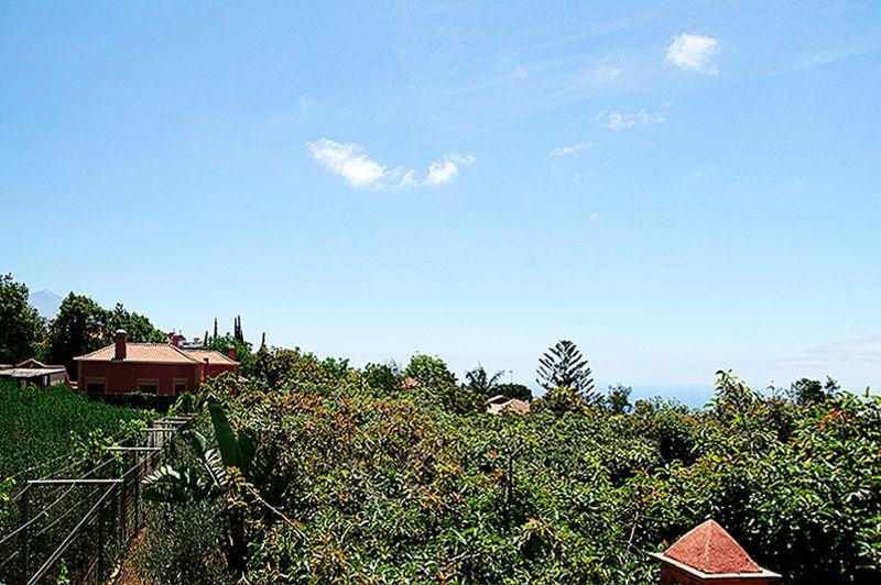 Arafo, Santa Cruz de Tenerife, Spain