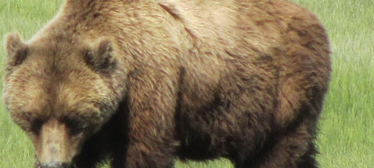 Seldovia, Alaska, Stati Uniti d'America
