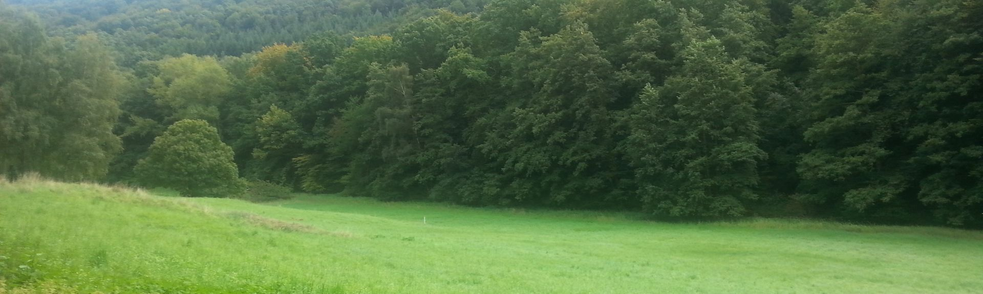Kirrweiler, Südliche Weinstraße, Rheinland-Pfalz, Deutschland