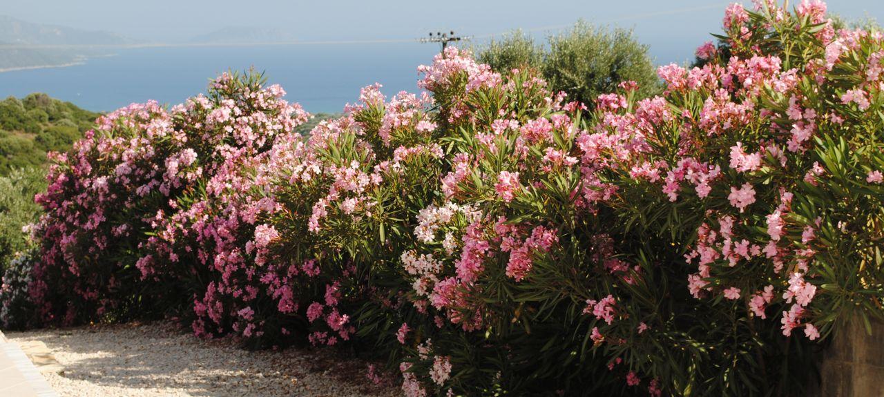 Gialova, Greece