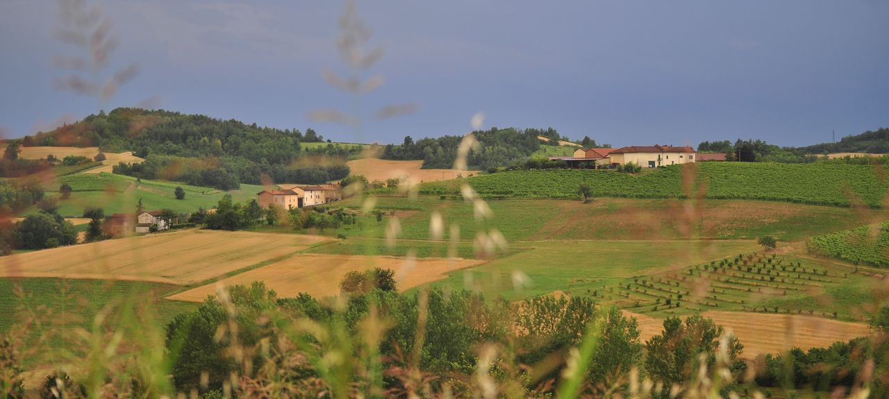 Portacomaro, Asti, Piedmont, Italy