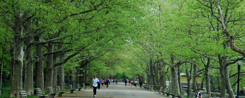 Rose Hill, New York, NY, USA