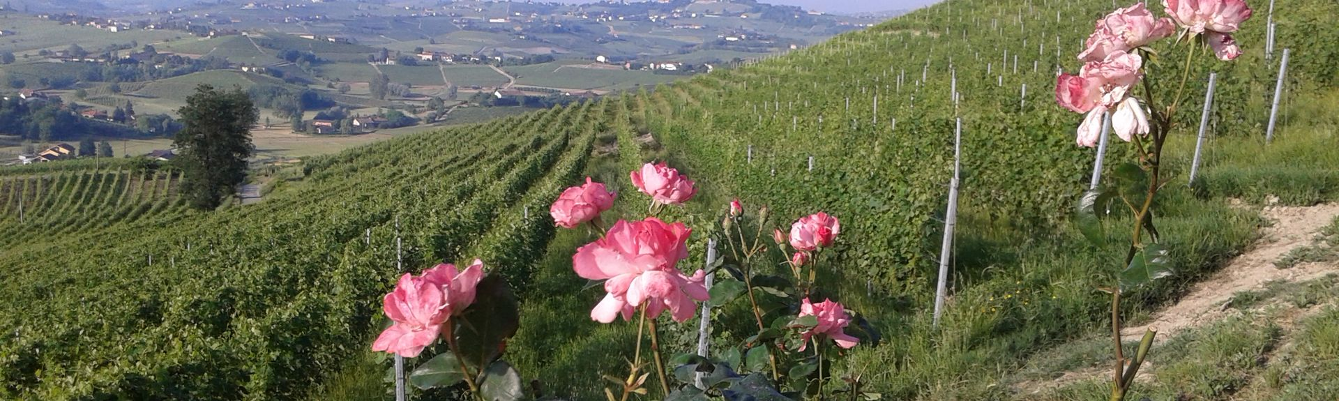 Calamandrana, Piedmont, Italy