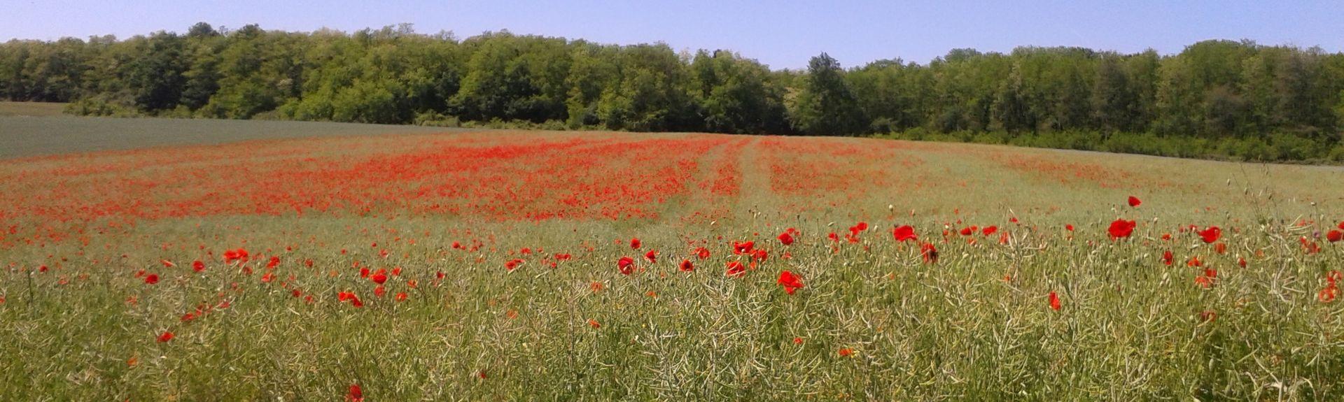 Dirol, Bourgogne-Franche-Comté, France