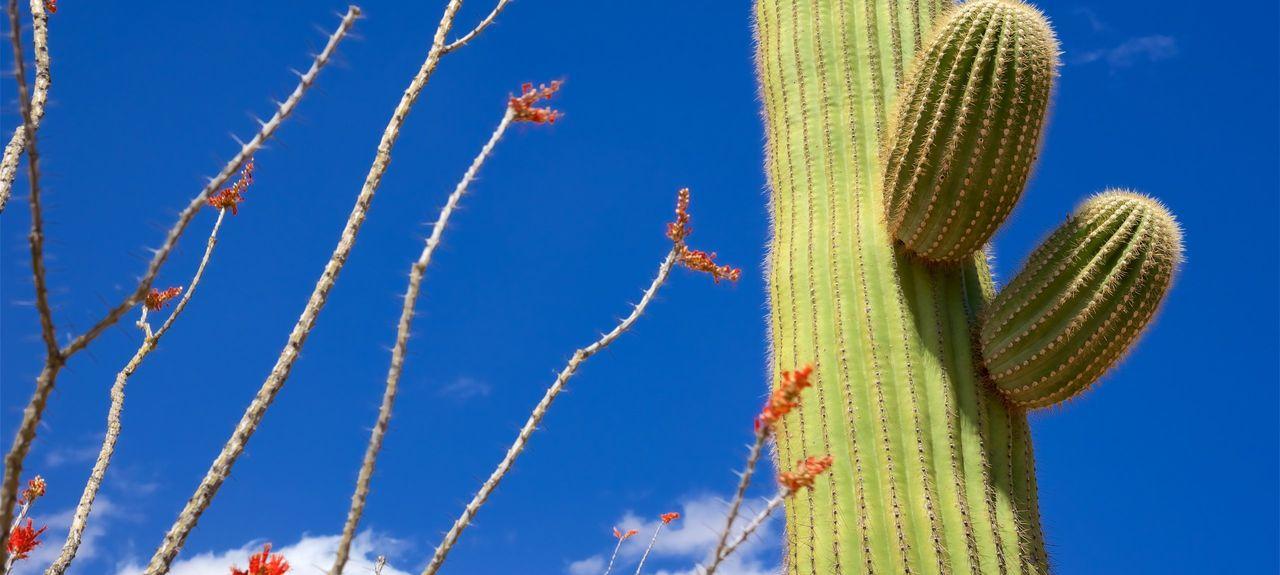Tucson, AZ, USA