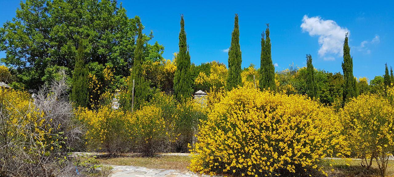 Miles Museum Mount Pelion, South Pelion, Thessalia Sterea Ellada, Greece