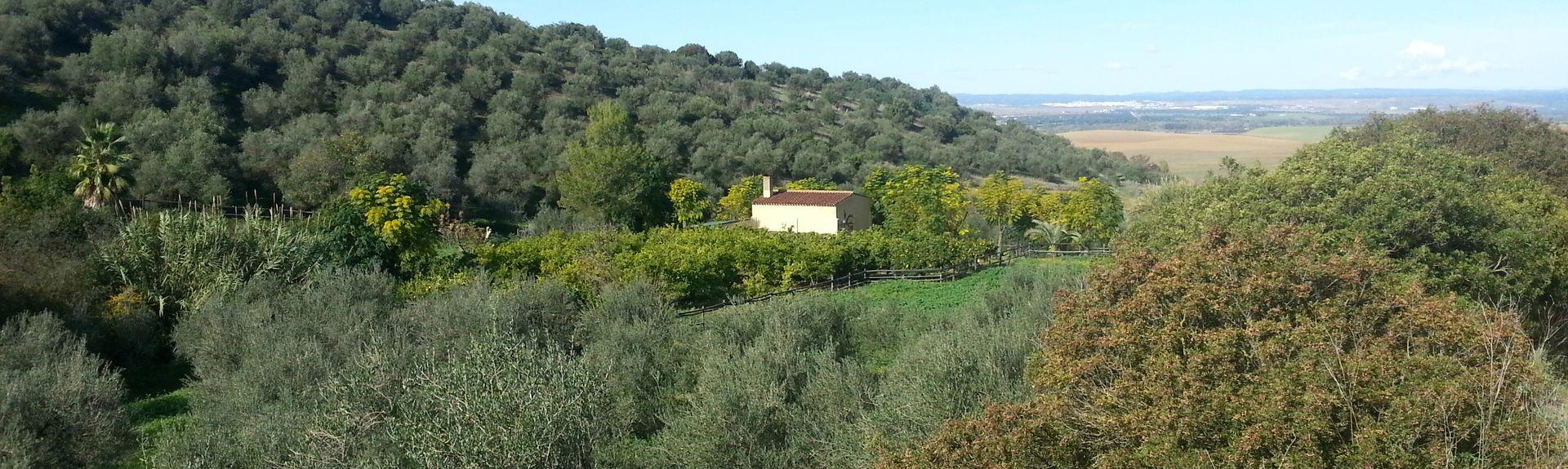 Paterna del Campo, Andaluzja, Hiszpania