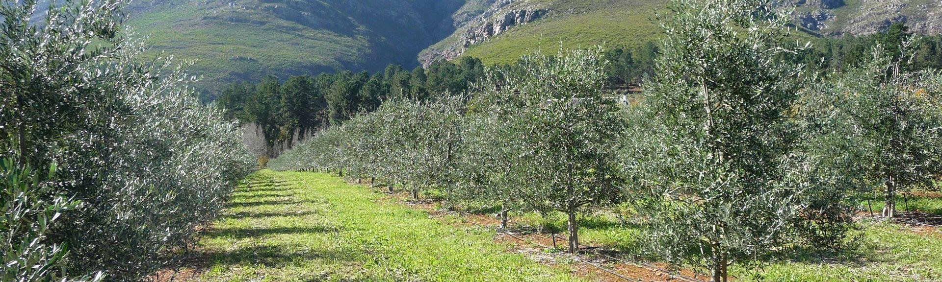 Stellenbosch, Cap-Occidental, Afrique du Sud